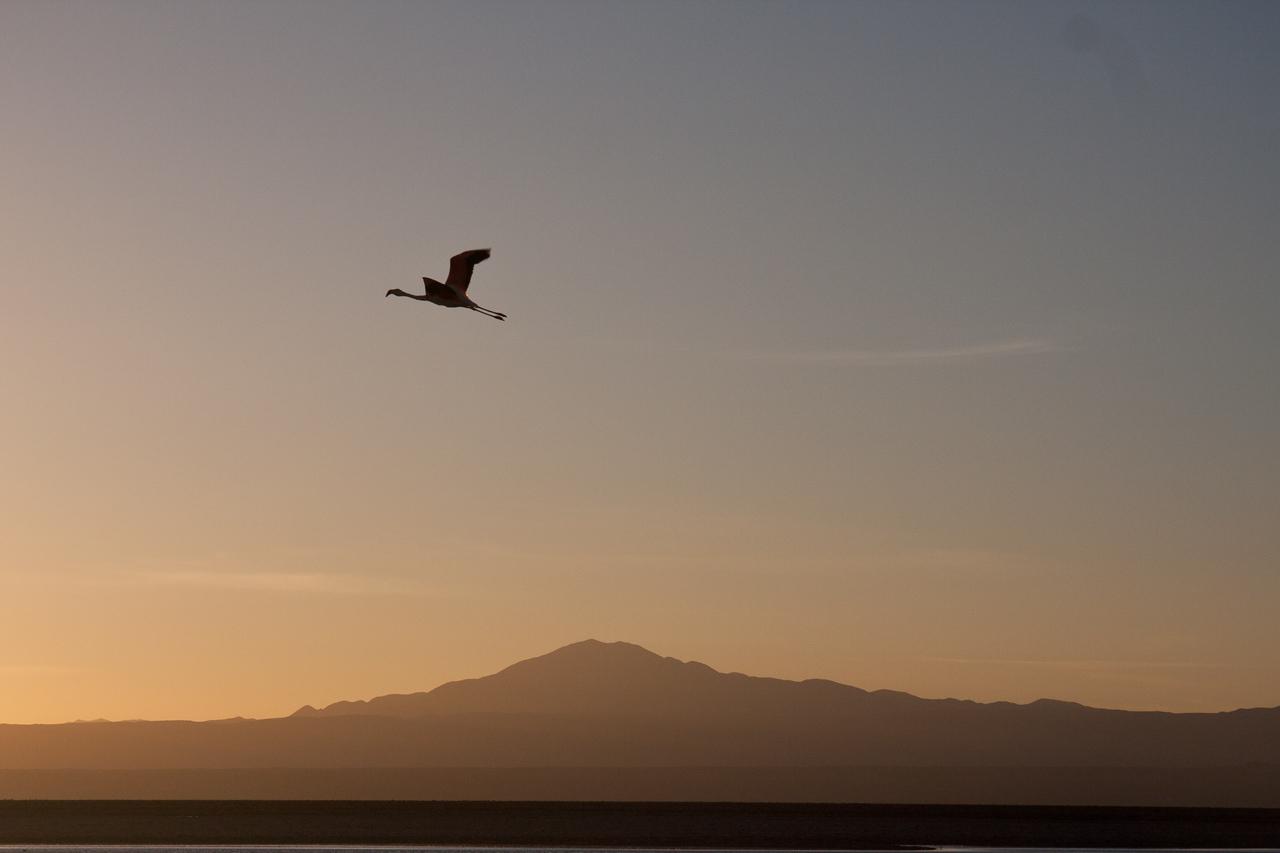 Tierra Atacama flamingo