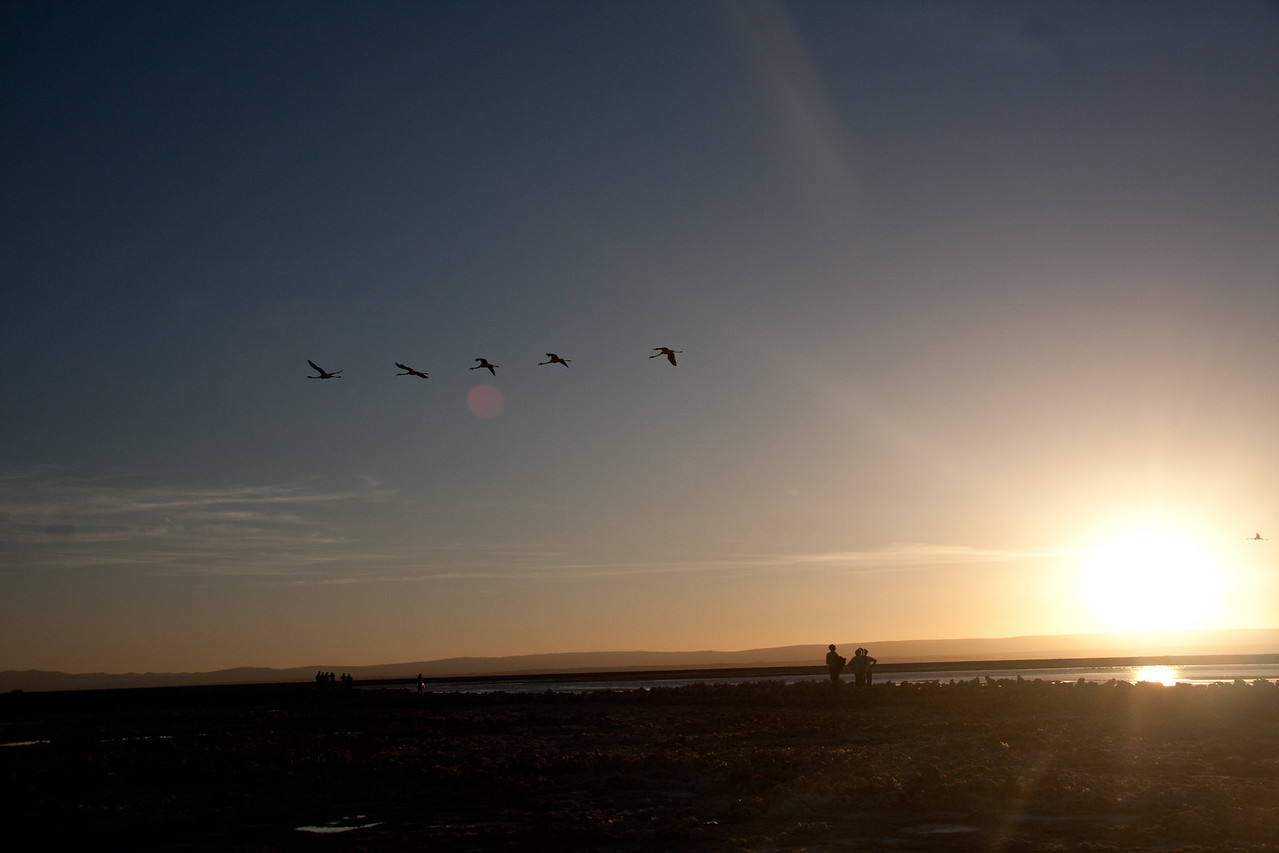 Tierra Atacama flamingos-4