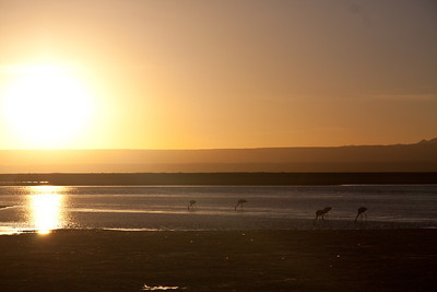 Tierra Atacama flamingos-3