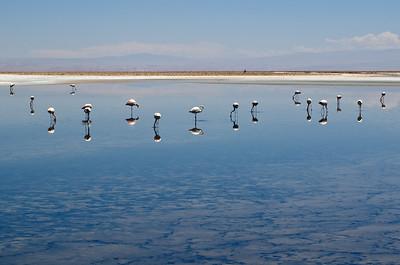 San Pedro de Atacama , Laguna Chaxa