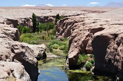 San Pedro de Atacama , Toconao