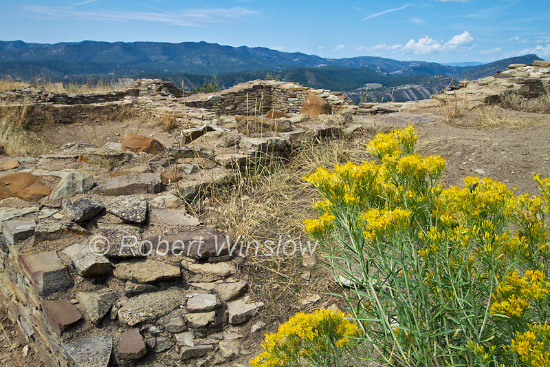 Ancestral Pueblo Ruins, Chimney Rock Archaeological Area and National Historic Site, San Juan National Forest, Archuleta County, Colorado, Yellow shrub is Rabbitbrush