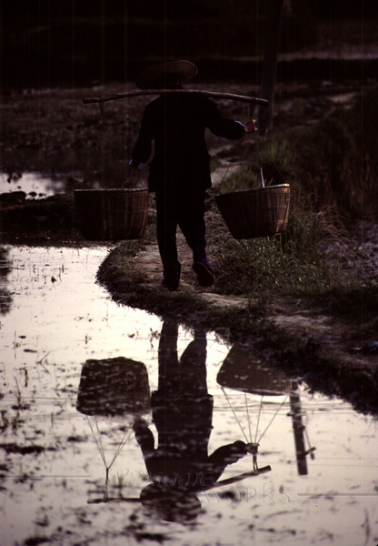 Farmer with basket yoke at dusk