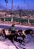 Man with horse & cart on the Xiaguan Rd. outside of Dali