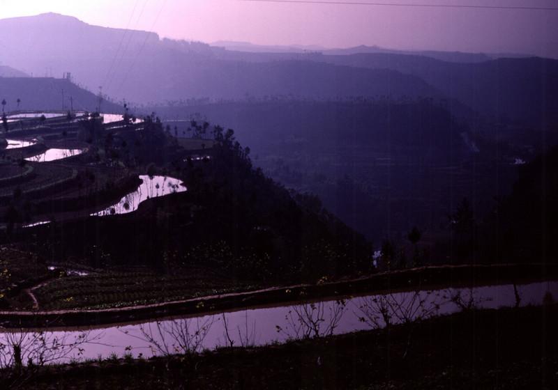 Terraced Fields in Periwinkle Dawn