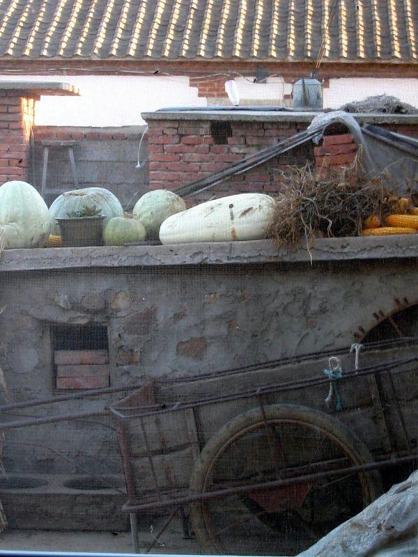 Melons and wheelbarrow in John's backyard.