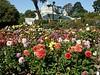 Conservatory of Flowers, Golden Gate Park