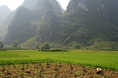Around Yangshou: Rice fields