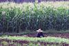 Farmer -Guilin