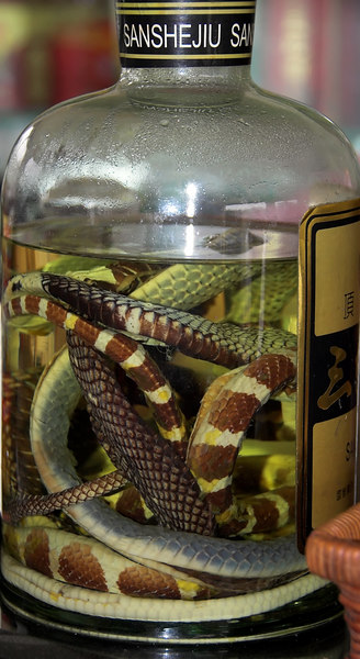 Snake Wine to boost your libido - served on Li River boat