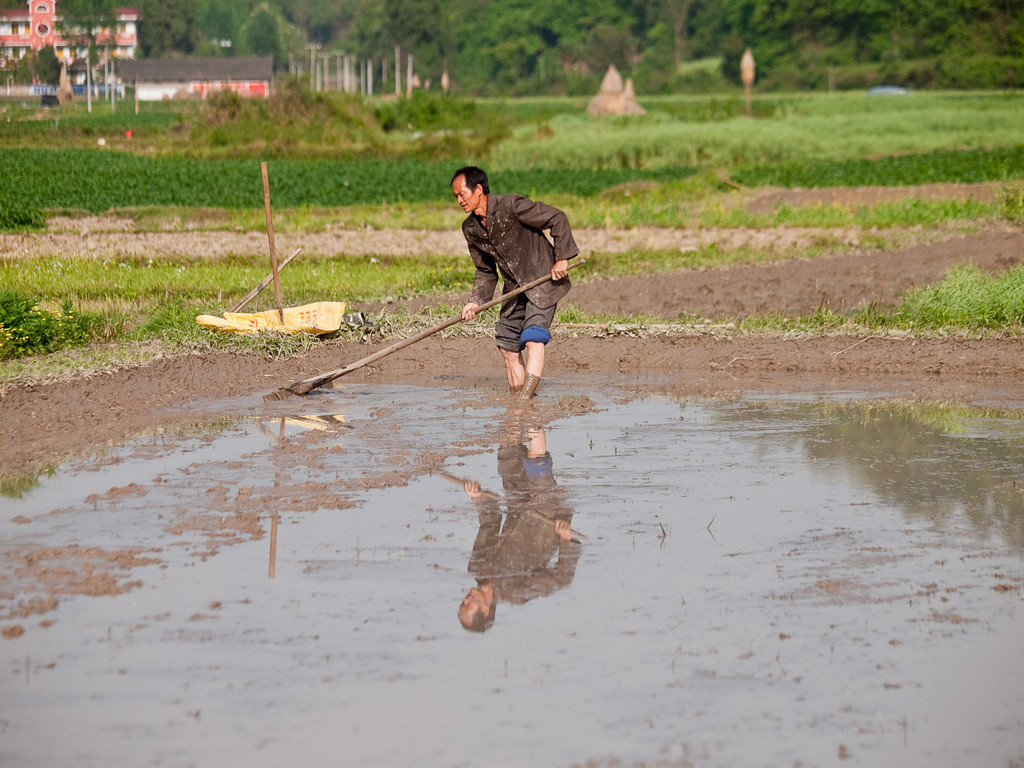 Nothing like doing a bit of farming in your best jacket! Preparing the surface for rice planting.