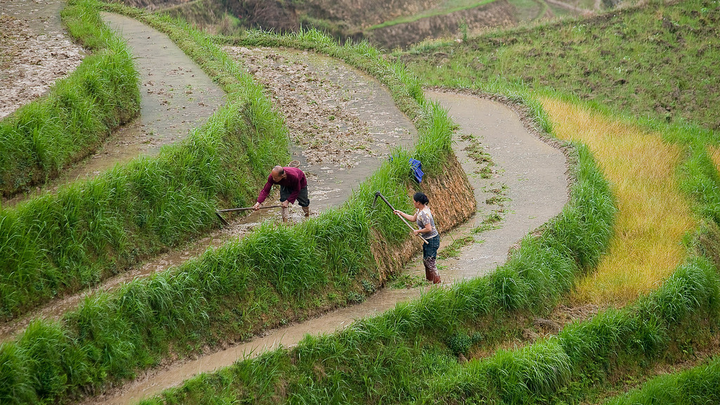 It's hard work once the rains come to clear the weed and plough it in, plant and then harvest.