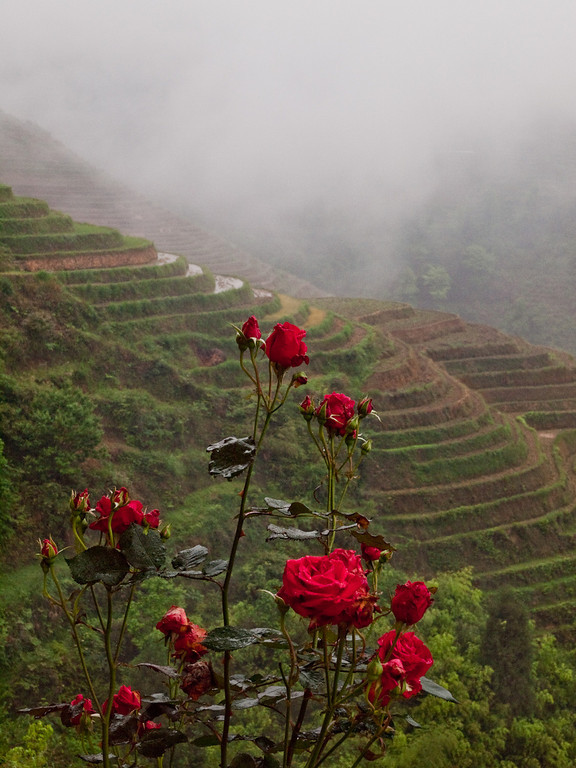 The Dragon's back rice terraces Longsheng. On a wet and misty morning. A view from our guesthouse
