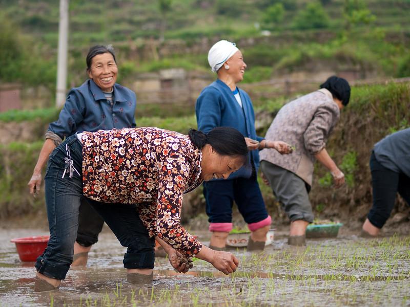 Rice planting Ma'tang