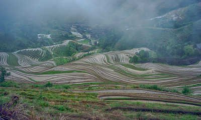 Rice fields in a cloud