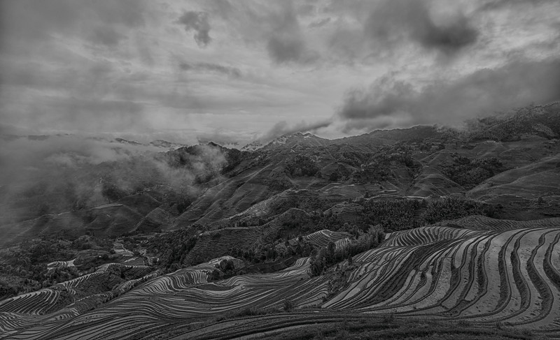 Black and White overview of rice fields