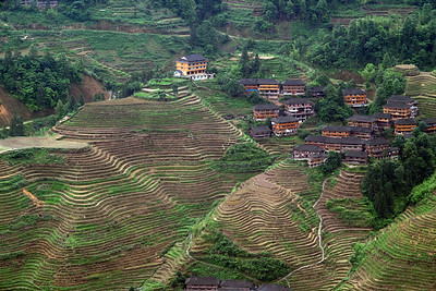 Danzhai Village--- Unwatered rice fields