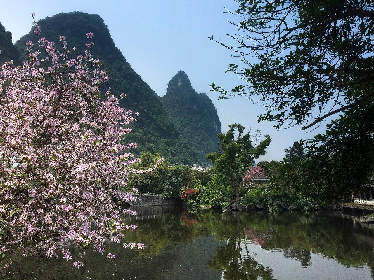 Yangsho scene
