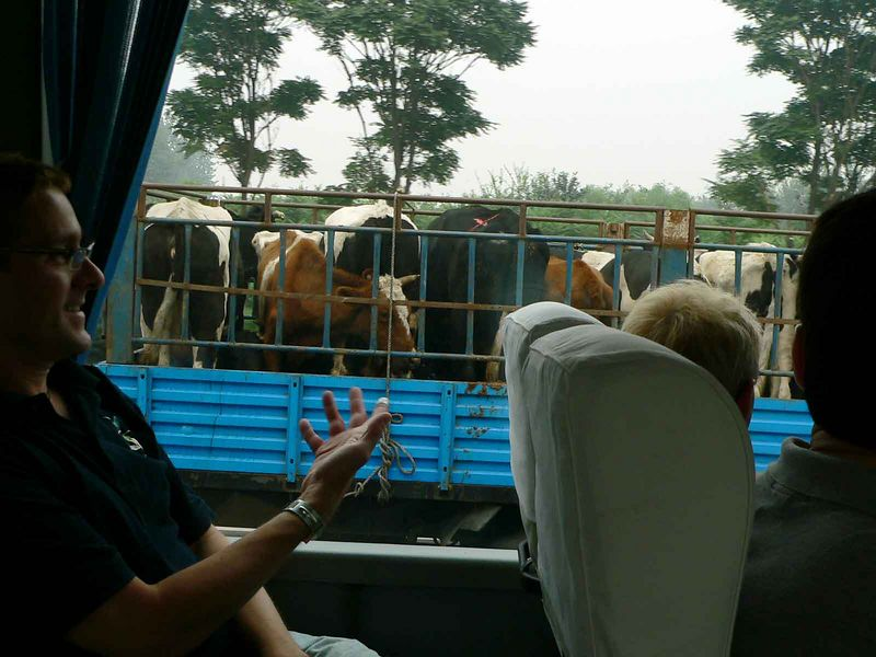 Blaze wonders if they are heading to our dinner table back in Beijing.