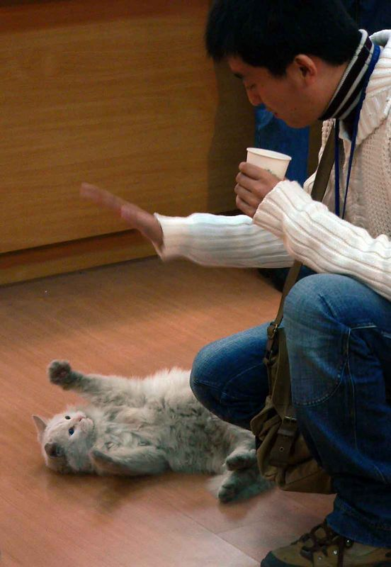 Dang playing with the cat at the Jade Factory & Museum, Xi'an China