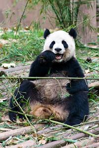 Tasty Bamboo