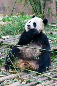 Tough Bamboo