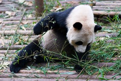 Tasty Bamboo ?