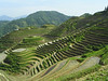 Rice terraces of Ping An and Dazai.