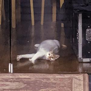 Friendcat in a camera shop.