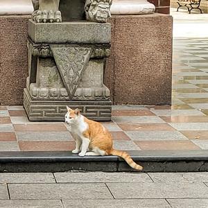 Friendcat.
