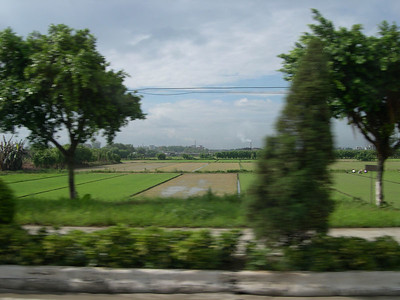 Panyu rice paddy