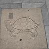 A Stalking Tortoise in SheKou