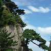 """What makes Huangshan particularly attractive is the pine trees with many different shapes. Most  are more than a hundred years old and have been given their own names (such as the """"Welcoming-Guests"""" Pine, which is thought to be over 1500 years old)"""