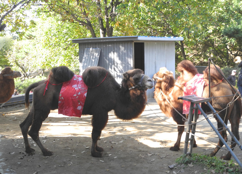 You even get a chance to ride a Bactrian camel