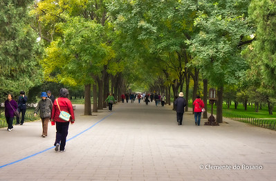 Tree lined paved walkway in the Temple of Heaven Park, Beijing