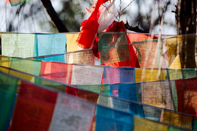 Prayer flags hang from trees on a side street.