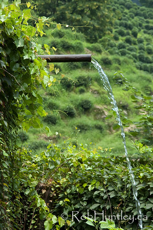 Water flowing from an overflow pipe in a water storage tank on a tea plantation near Hangzhou, China. © Rob Huntley