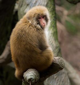 [ Bifeng Panda Reserve-_WP_0923-]_