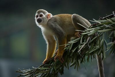 [ Bifeng Panda Reserve-_WP_0955-]_