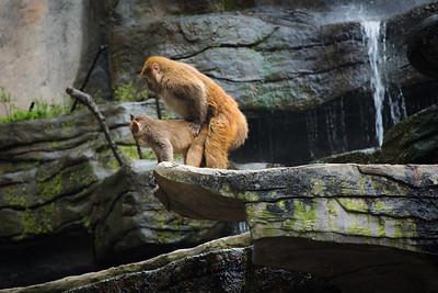 [ Bifeng Panda Reserve-_WP_0917-]_