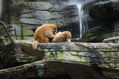 [ Bifeng Panda Reserve-_WP_0921-]_