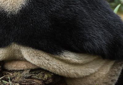 [ Bifeng Panda Reserve-_WP_0813-]_