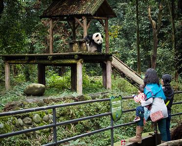 [ Bifeng Panda Reserve-_WP_0830-]_