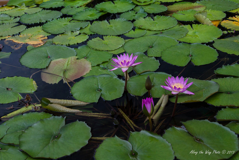 China-4044<br /> Lotus Pond in front of the Hall of Celestial Kings in the Chi Lin Nunnery Complex in Kowloon, Hong Kong.