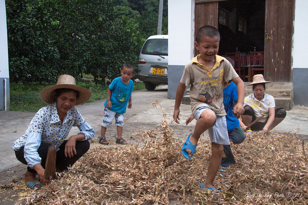China-2518<br /> Children helping, in their own way, to separate the soy beans from the pods at a small farming village on the Yulong River.
