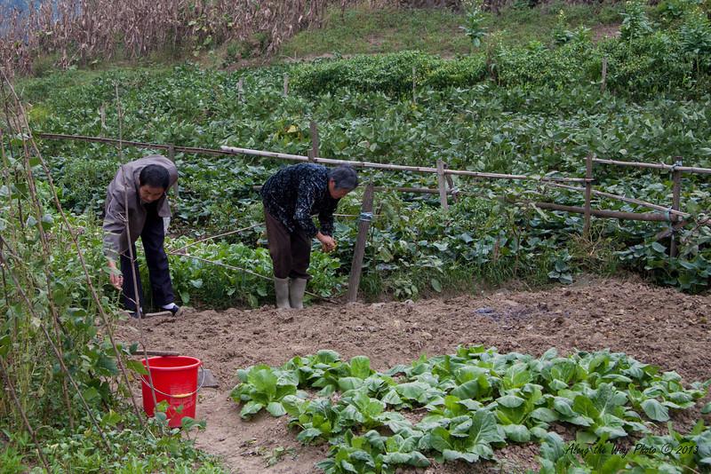 China-3545<br /> Garden plot in Xidi Village.
