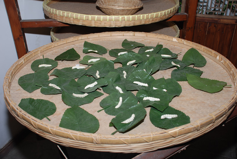 Mulberry leaves and silkworms