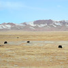 As we climb again, the grasslands dry up for winter