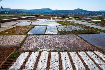 Jianshui rice paddies