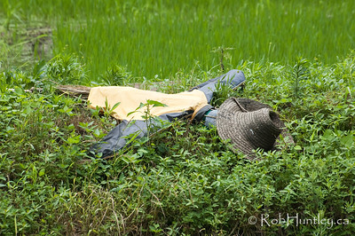 Scarecrow Siesta. Sleeping or dead? Rice paddy near Wuzhen, China. © Rob Huntley